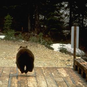 Bear Conflict Solutions Institute