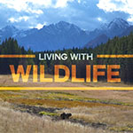Living With Wildlife - Bear Conflict Solutions