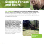 Electric-Fences-and-Bears-Fact-Sheet-2017